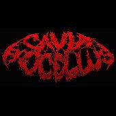 豚鼠乐队CaviaPorcellus