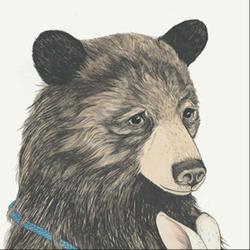 百年树袋熊